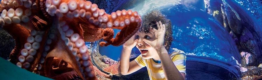 SeaWorld San Diego